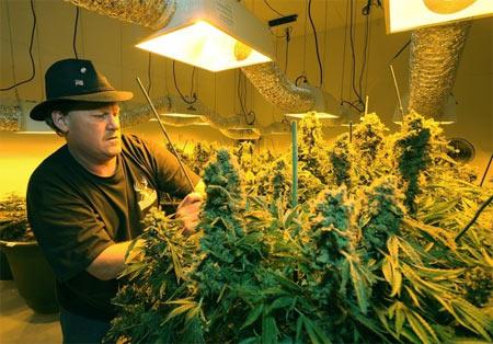 Pot of Gold: How I Make Low-Risk Money From Marijuana